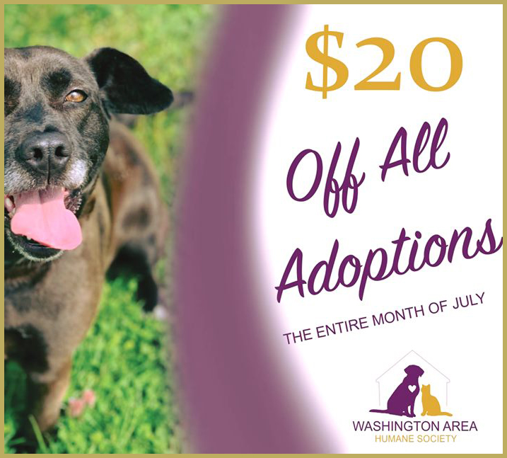Washington Area Humane Society | A no-kill shelter funded solely by